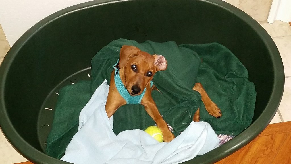 puppy buried in fleeces