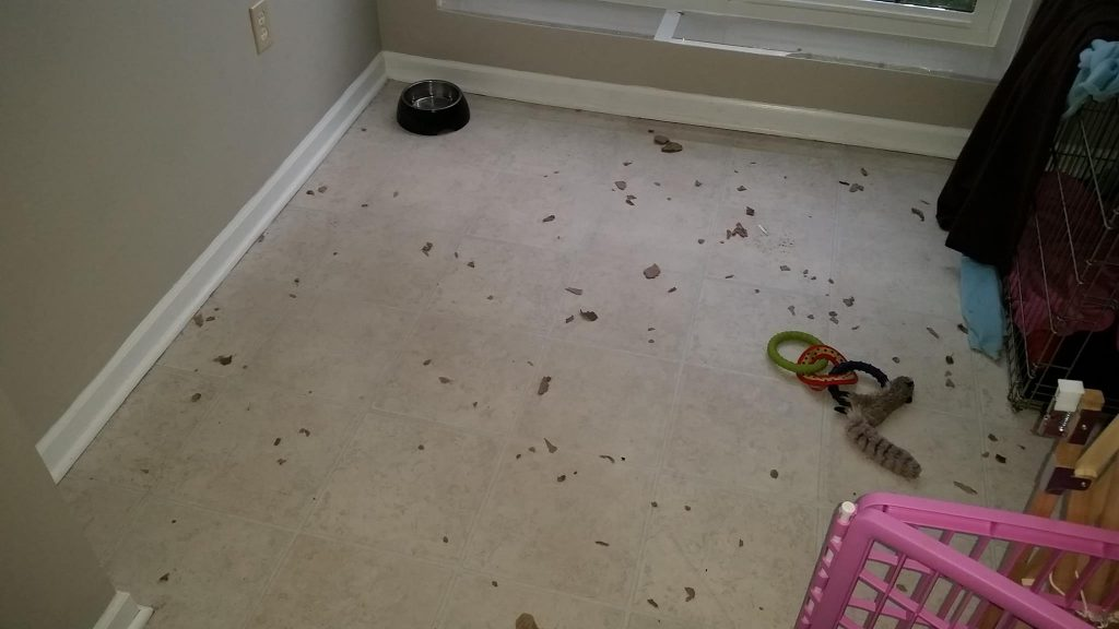 shredded cardboard on kitchen floor